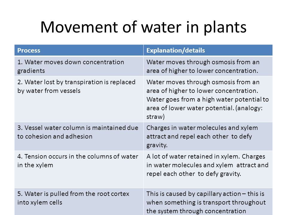 Movement of water in plants ProcessExplanation/details 1.