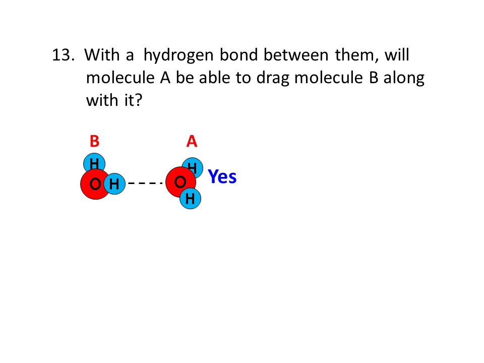 13. With a hydrogen bond between them, will molecule A be able to drag molecule B along with it? AB Yes