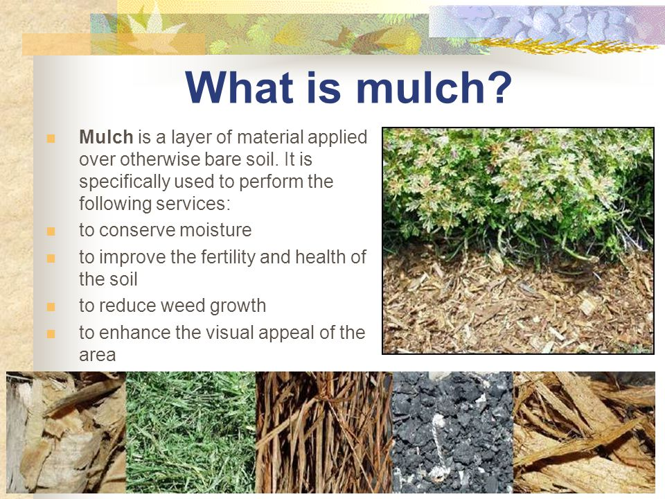 Types of Mulch Organic materials bark, wood chips, leaves, pine needles, grass clippings Inorganic materials gravel, pebbles, rubber, or woven ground cloth NOT recommended; they do not add organic content to soil