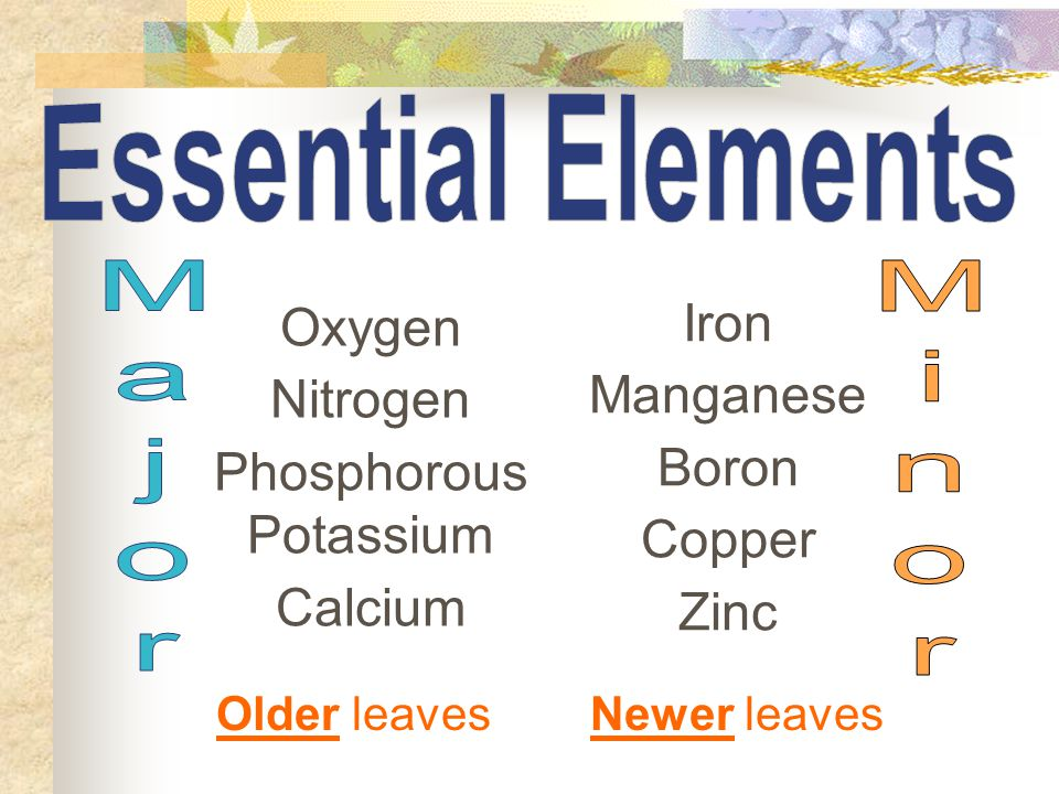 Oxygen Nitrogen Phosphorous Potassium Calcium Iron Manganese Boron Copper Zinc Older leavesNewer leaves