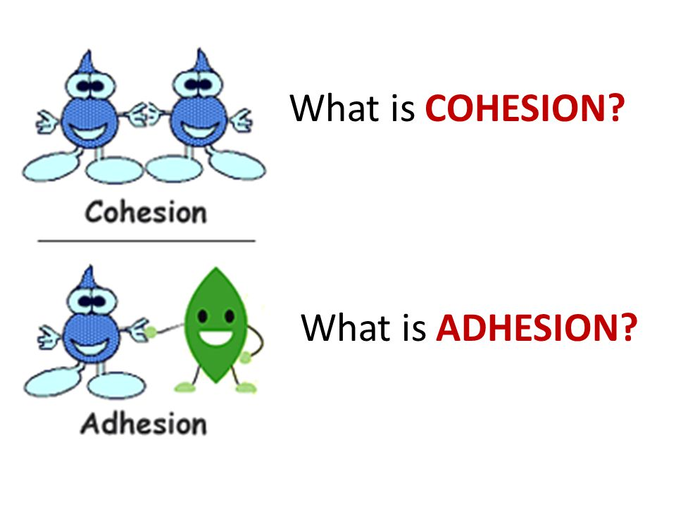 What is COHESION What is ADHESION