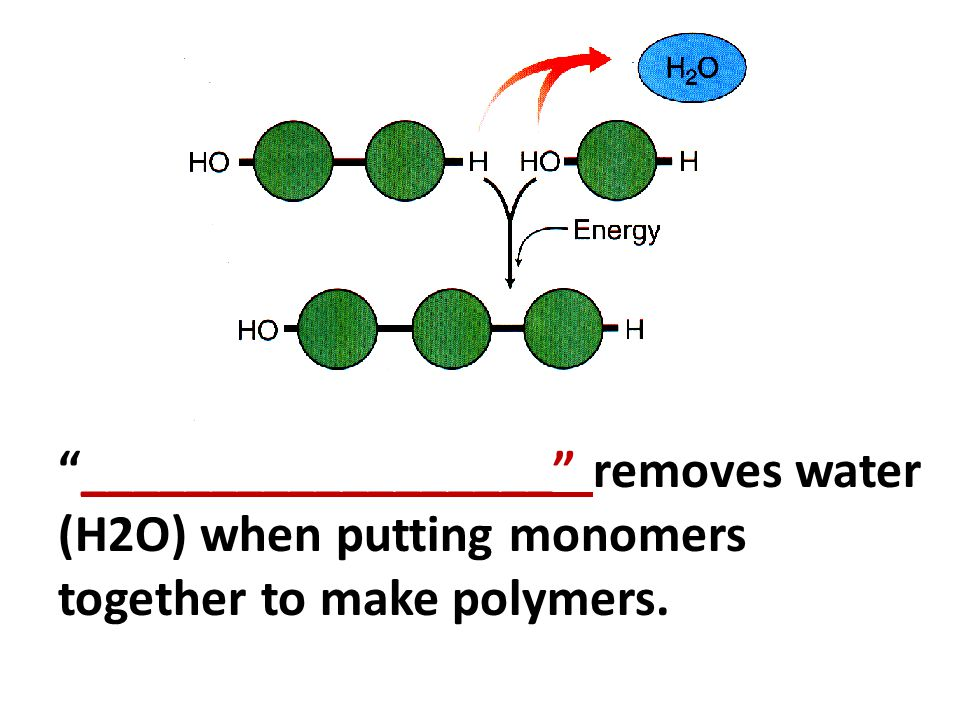 __________________ removes water (H2O) when putting monomers together to make polymers.