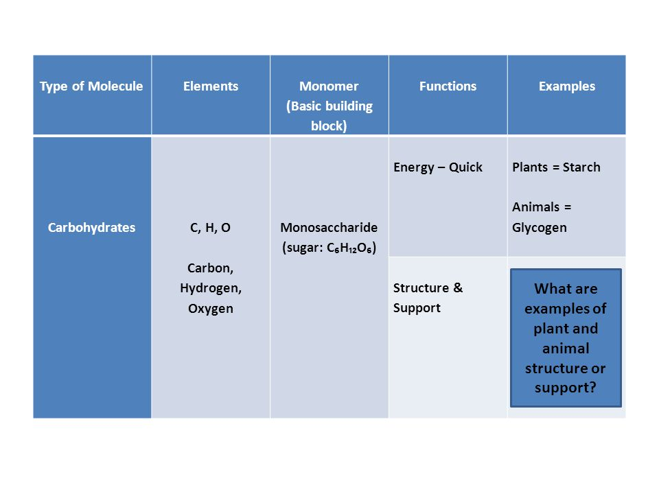 Type of Molecule Elements Monomer (Basic building block) Functions Examples Carbohydrates C, H, O Carbon, Hydrogen, Oxygen Monosaccharide (sugar: C₆H₁₂O₆) Energy – Quick Plants = Starch Animals = Glycogen Structure & Support Plants = Cellulose (fiber in cell walls) Animals = Chitin (exoskeletons) What are examples of plant and animal structure or support