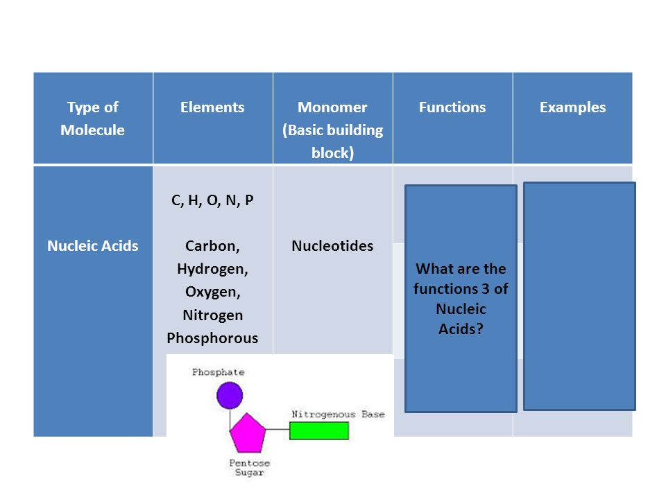 Type of Molecule Elements Monomer (Basic building block) Functions Examples Nucleic Acids C, H, O, N, P Carbon, Hydrogen, Oxygen, Nitrogen Phosphorous Nucleotides Genetic Info DNA Protein Synthesis (making) RNA Energy ATP What are the functions 3 of Nucleic Acids