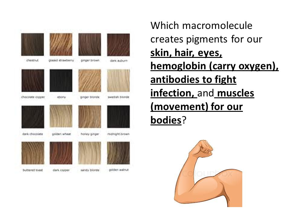 Which macromolecule creates pigments for our skin, hair, eyes, hemoglobin (carry oxygen), antibodies to fight infection, and muscles (movement) for our bodies