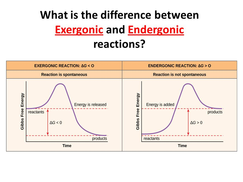 What is the difference between Exergonic and Endergonic reactions