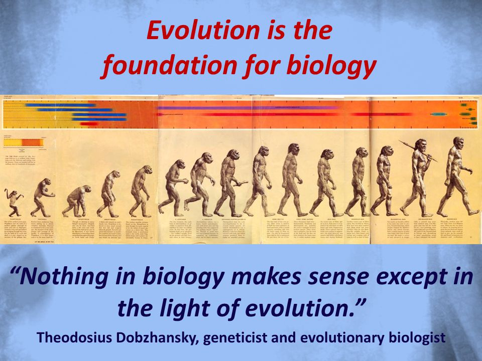 Evolution is the foundation for biology Nothing in biology makes sense except in the light of evolution. Theodosius Dobzhansky, geneticist and evolutionary biologist