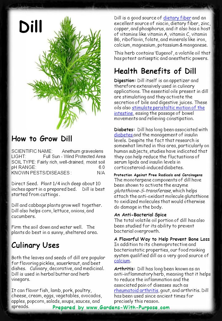 Dill is a good source of dietary fiber and an excellent source of niacin, dietary fiber, zinc, copper, and phosphorus, and it also has a host of vitam