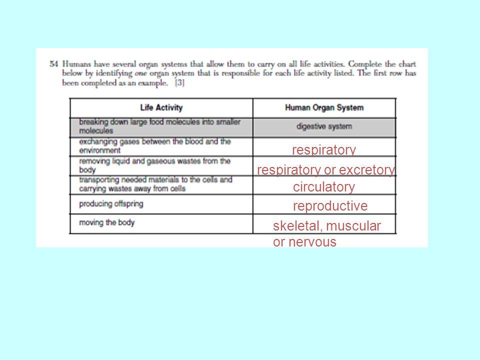 respiratory respiratory or excretory circulatory reproductive skeletal, muscular or nervous