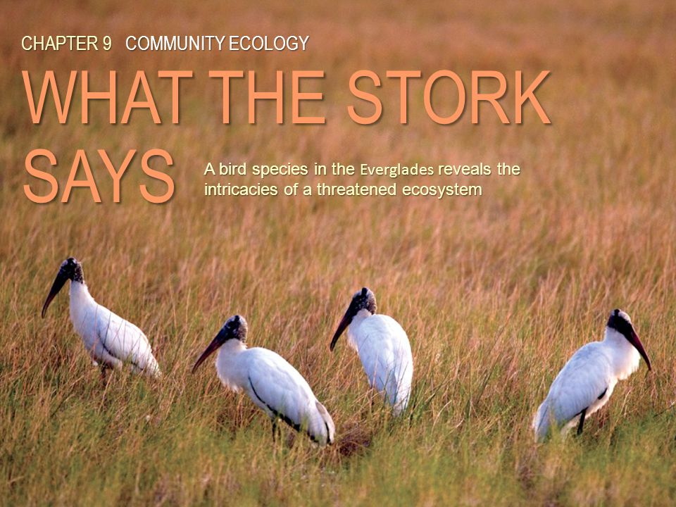 CHAPTER 9COMMUNITY ECOLOGY WHAT THE STORK SAYS CHAPTER 9 COMMUNITY ECOLOGY WHAT THE STORK SAYS A bird species in the Everglades reveals the intricacie