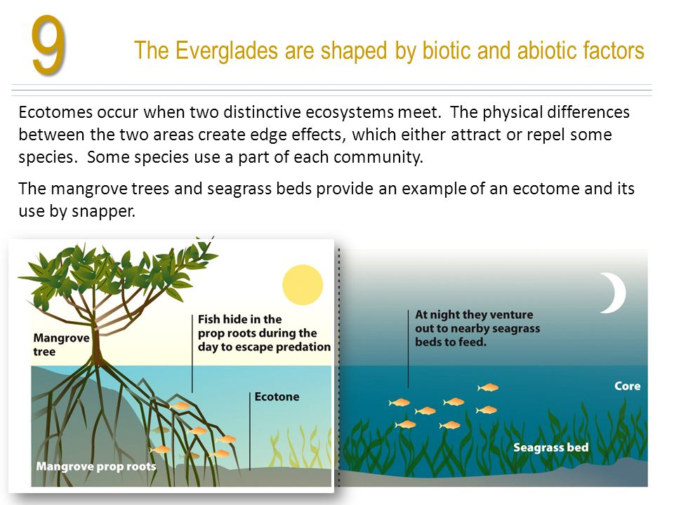 9 Ecotomes occur when two distinctive ecosystems meet. The physical differences between the two areas create edge effects, which either attract or rep