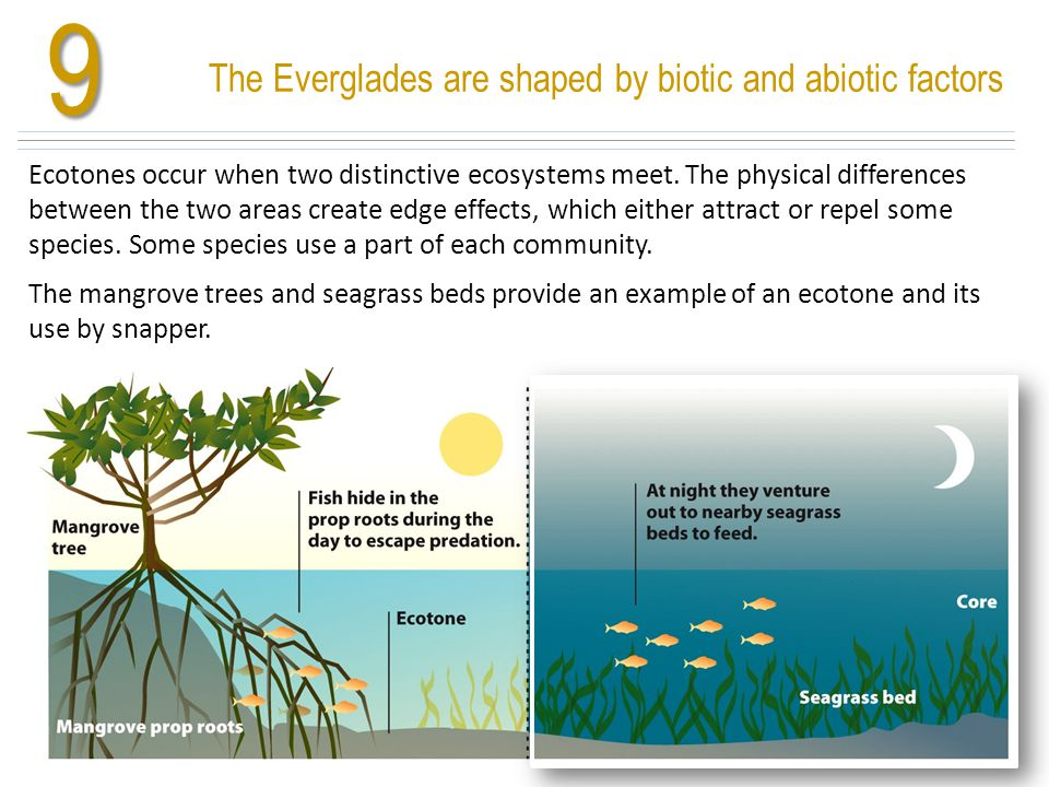 9 Ecotones occur when two distinctive ecosystems meet. The physical differences between the two areas create edge effects, which either attract or rep