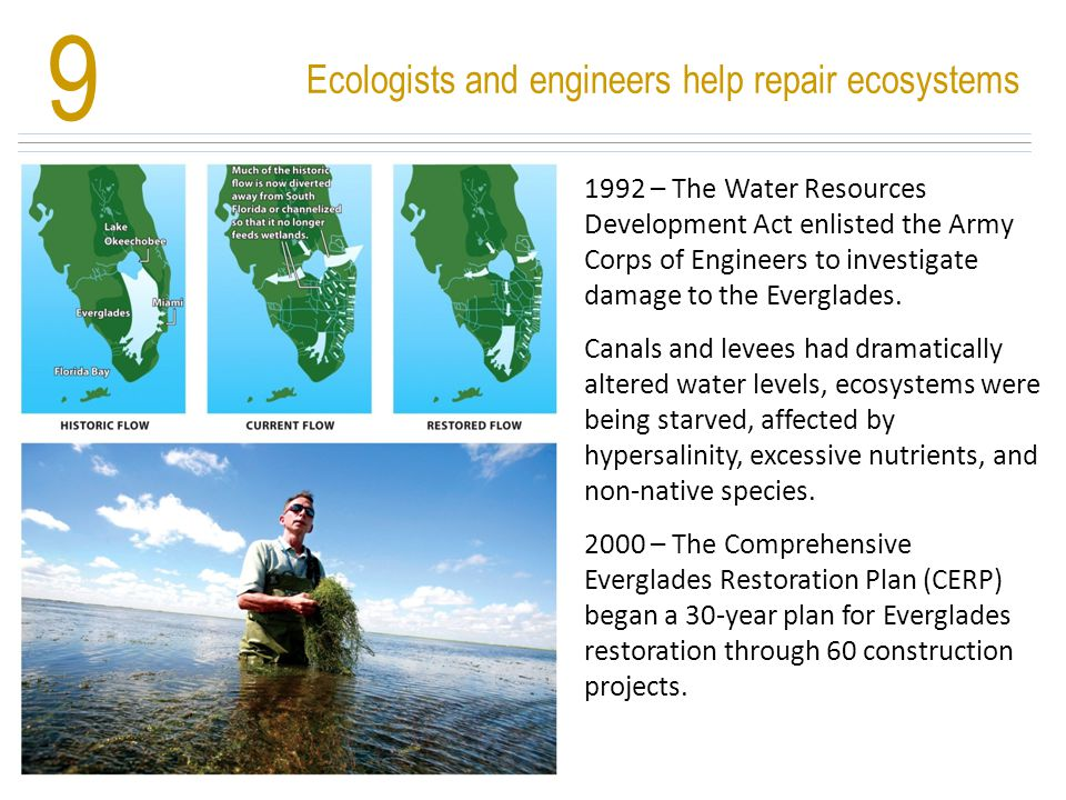 Ecologists and engineers help repair ecosystems 9 1992 – The Water Resources Development Act enlisted the Army Corps of Engineers to investigate damag