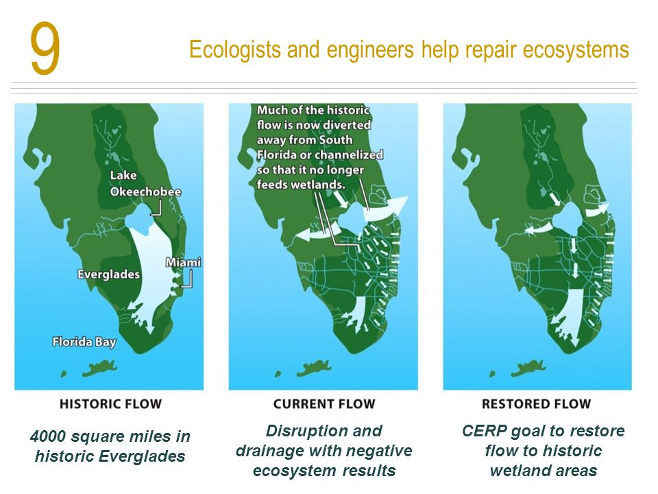 Ecologists and engineers help repair ecosystems 9 4000 square miles in historic Everglades Disruption and drainage with negative ecosystem results CER