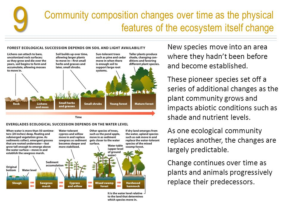 Community composition changes over time as the physical features of the ecosystem itself change9 New species move into an area where they hadn't been