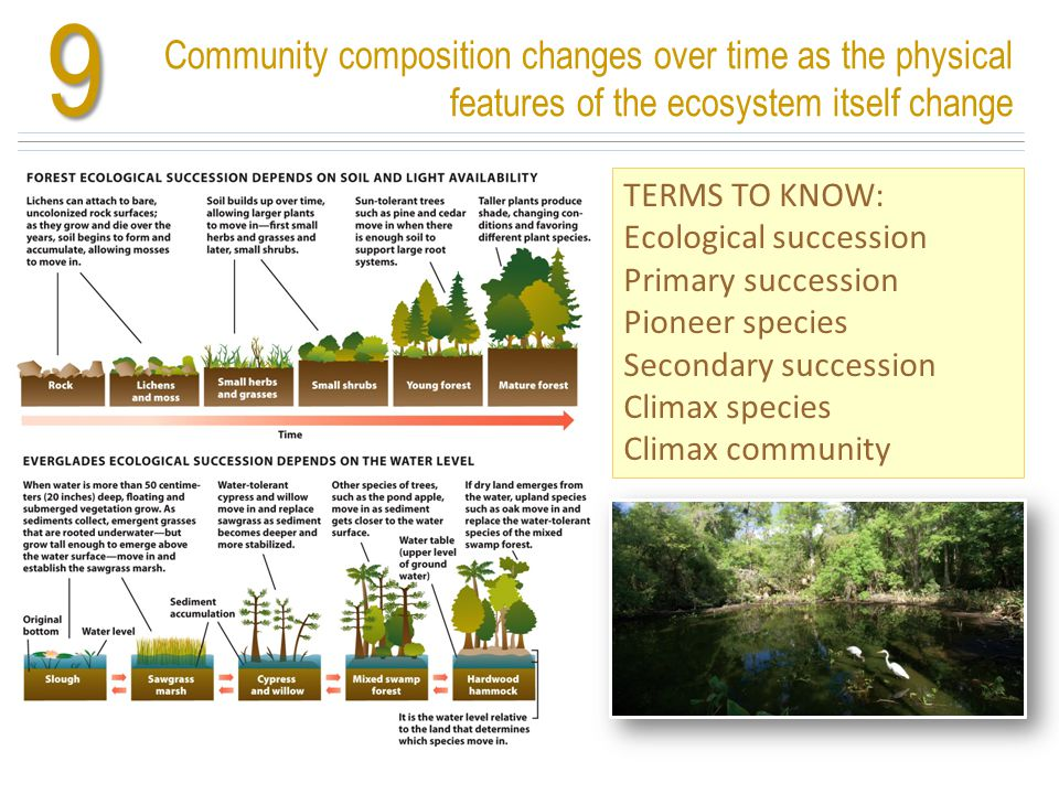 Community composition changes over time as the physical features of the ecosystem itself change9 TERMS TO KNOW: Ecological succession Primary successi