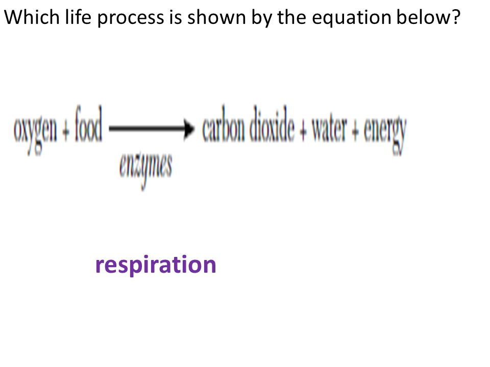 Which life process is shown by the equation below? respiration