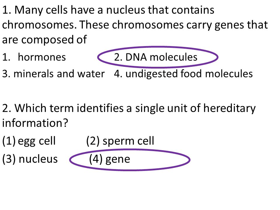 1. Many cells have a nucleus that contains chromosomes. These chromosomes carry genes that are composed of 1.hormones 2. DNA molecules 3. minerals and