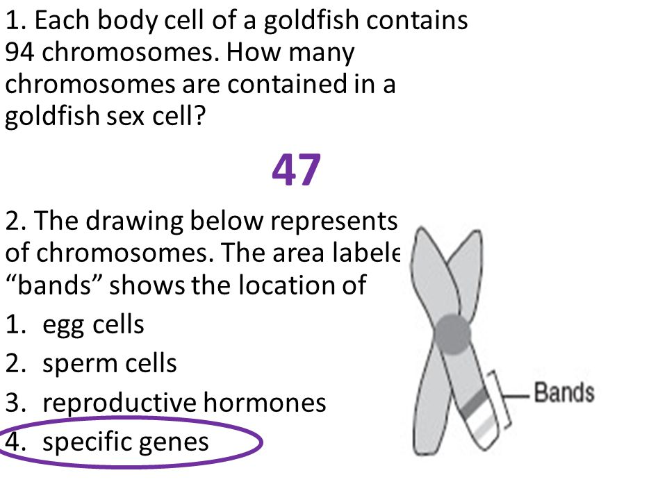 1.Each body cell of a goldfish contains 94 chromosomes.