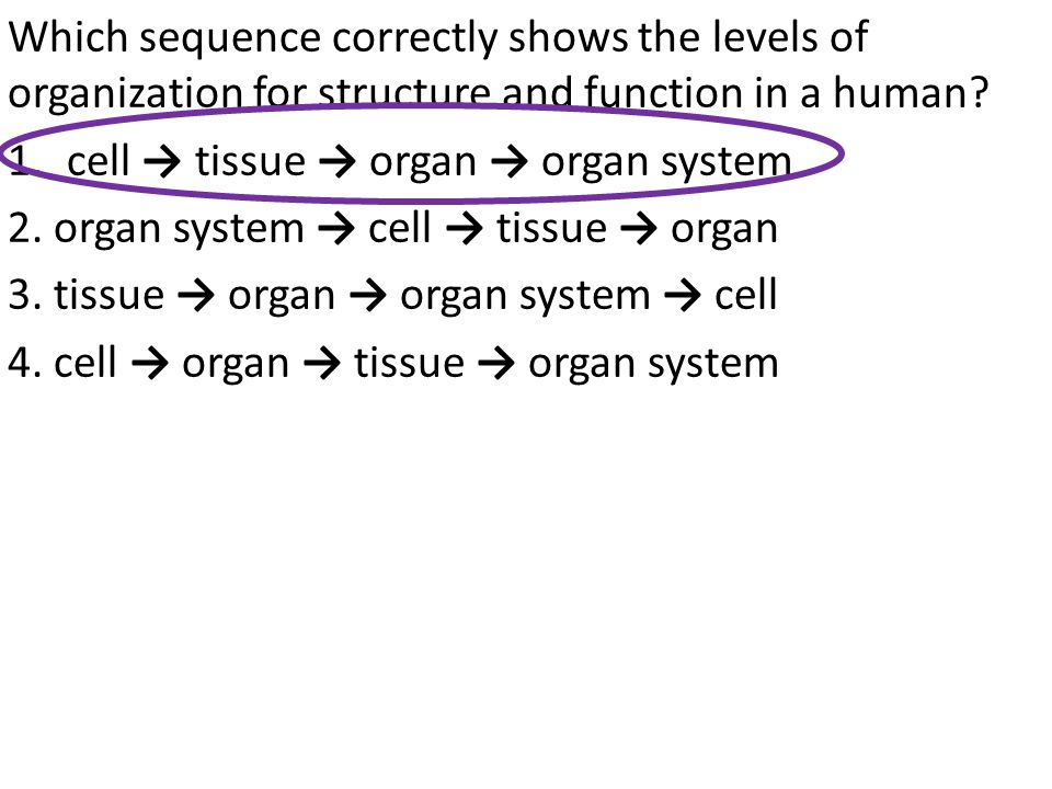 Which sequence correctly shows the levels of organization for structure and function in a human? 1.cell → tissue → organ → organ system 2. organ syste