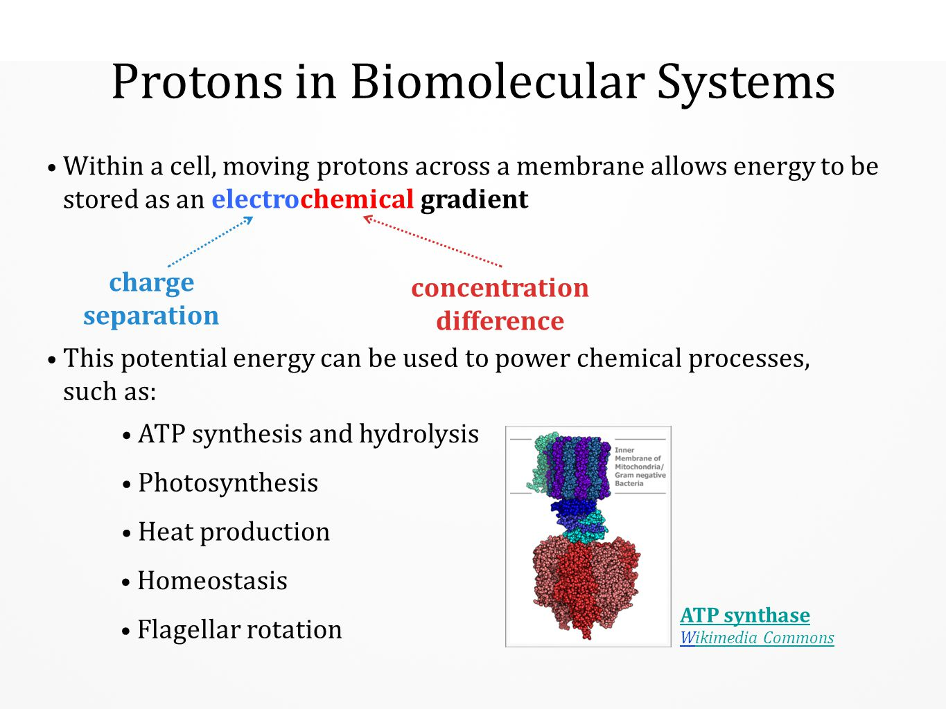 Protons in Biomolecular Systems This potential energy can be used to power chemical processes, such as: Within a cell, moving protons across a membran