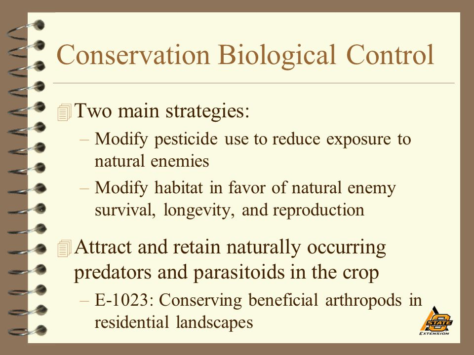 Conservation Biological Control 4 Two main strategies: –Modify pesticide use to reduce exposure to natural enemies –Modify habitat in favor of natural