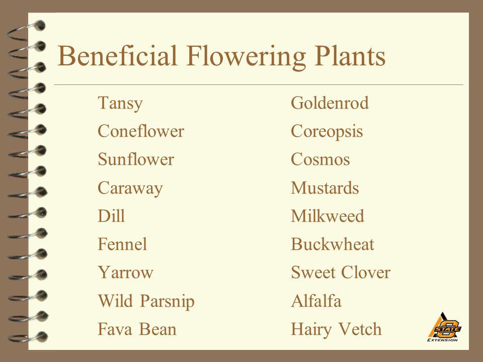 Beneficial Flowering Plants TansyGoldenrod ConeflowerCoreopsis SunflowerCosmos CarawayMustards DillMilkweed FennelBuckwheat YarrowSweet Clover Wild Pa