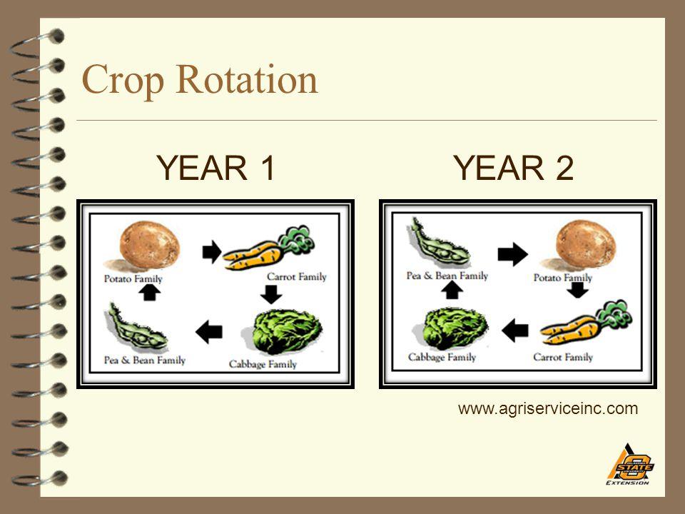 Crop Rotation YEAR 1YEAR 2 www.agriserviceinc.com