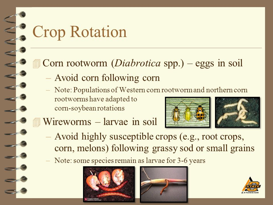 Crop Rotation 4 Corn rootworm (Diabrotica spp.) – eggs in soil –Avoid corn following corn –Note: Populations of Western corn rootworm and northern cor