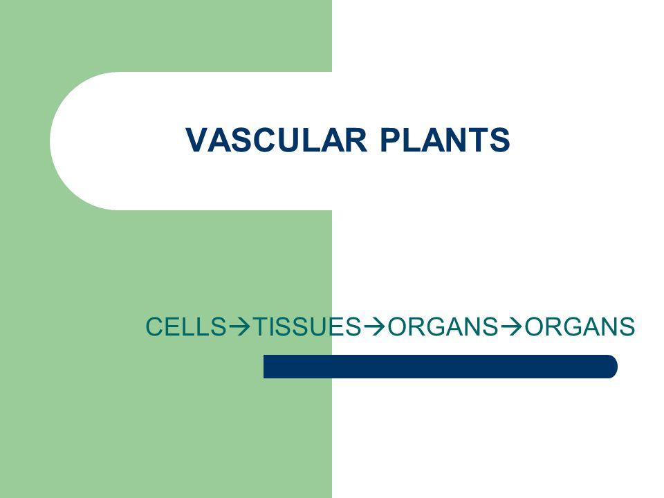 VASCULAR PLANTS CELLS  TISSUES  ORGANS  ORGANS