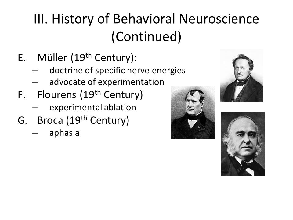 III. History of Behavioral Neuroscience (Continued) E.Müller (19 th Century): – doctrine of specific nerve energies – advocate of experimentation F.Fl