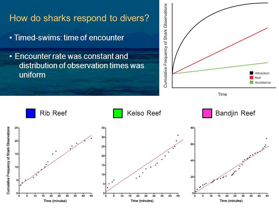 How do sharks respond to divers.