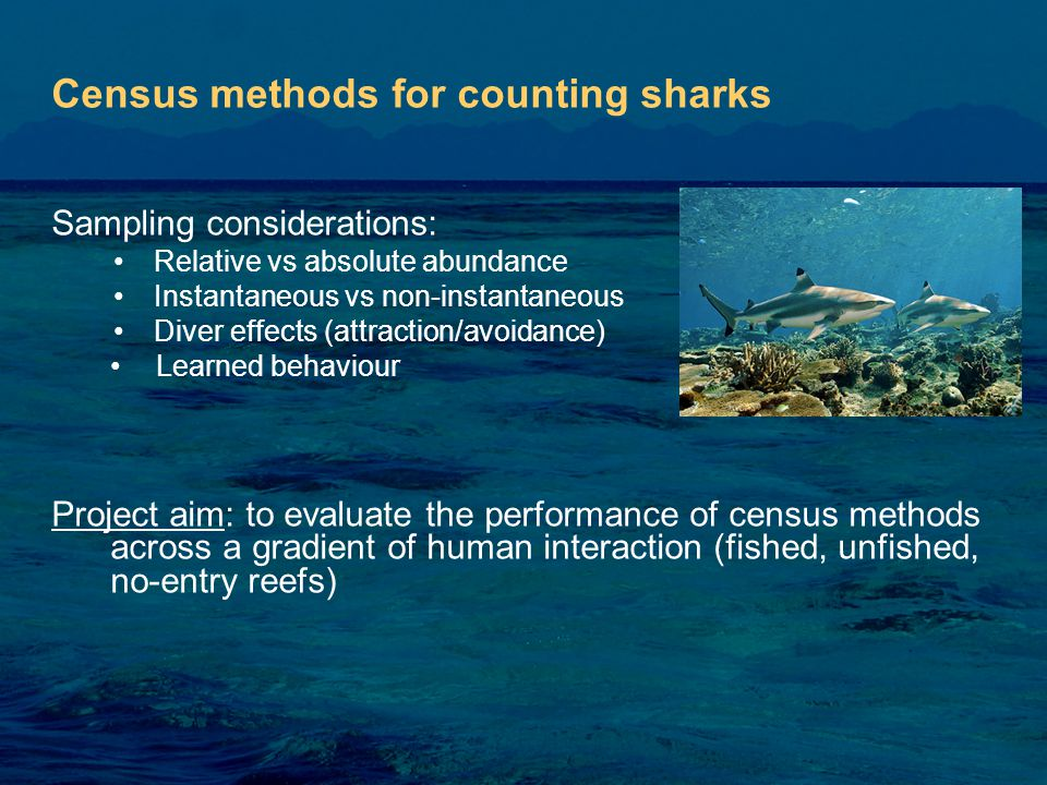 Sampling considerations: Relative vs absolute abundance Instantaneous vs non-instantaneous Diver effects (attraction/avoidance) Learned behaviour Project aim: to evaluate the performance of census methods across a gradient of human interaction (fished, unfished, no-entry reefs) Census methods for counting sharks