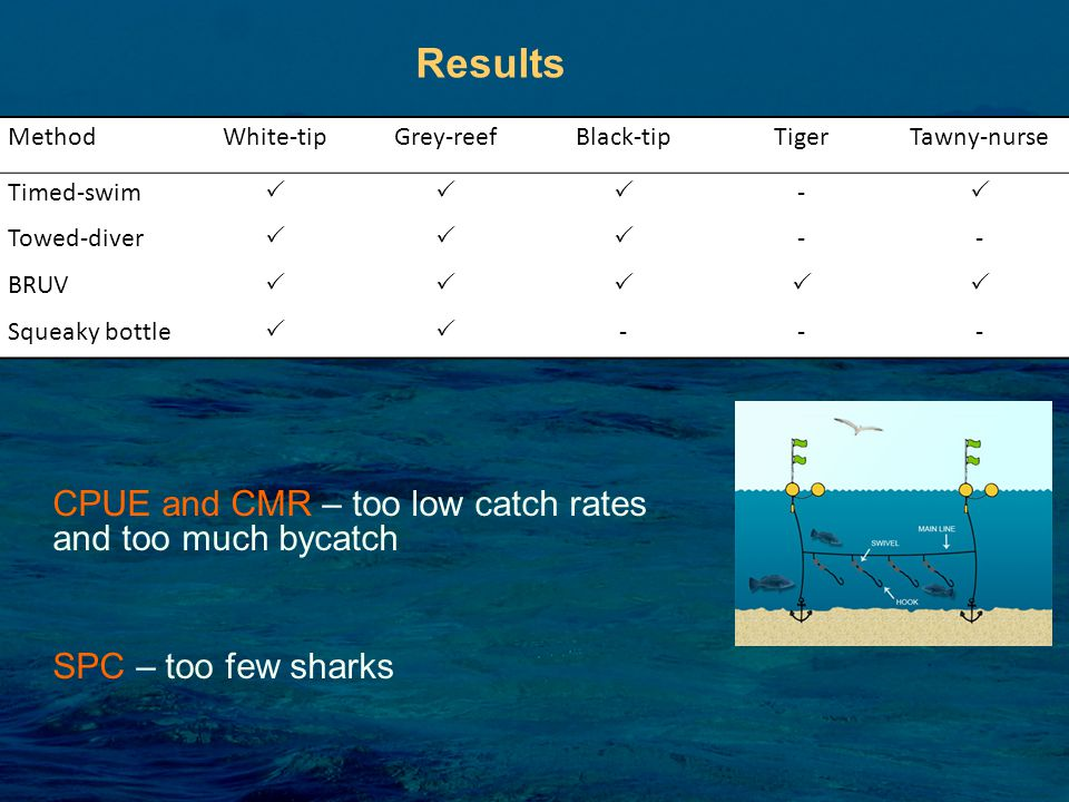 CPUE and CMR – too low catch rates and too much bycatch SPC – too few sharks MethodWhite-tipGrey-reefBlack-tipTigerTawny-nurse Timed-swim  -  Towed-diver  -- BRUV  Squeaky bottle  --- Results