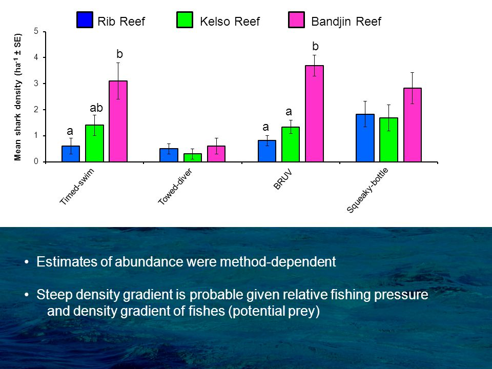 Rib Reef Kelso Reef Bandjin Reef b a a ab b a Squeaky-bottle Estimates of abundance were method-dependent Steep density gradient is probable given relative fishing pressure and density gradient of fishes (potential prey) Timed-swimTowed-diver BRUV
