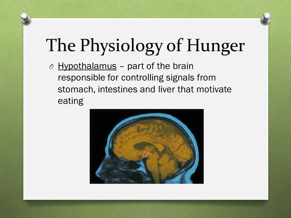The Physiology of Hunger O Hypothalamus – part of the brain responsible for controlling signals from stomach, intestines and liver that motivate eating