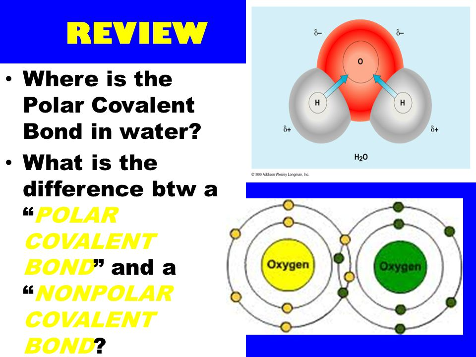 "REVIEW Where is the Polar Covalent Bond in water? What is the difference btw a ""POLAR COVALENT BOND"" and a ""NONPOLAR COVALENT BOND?"