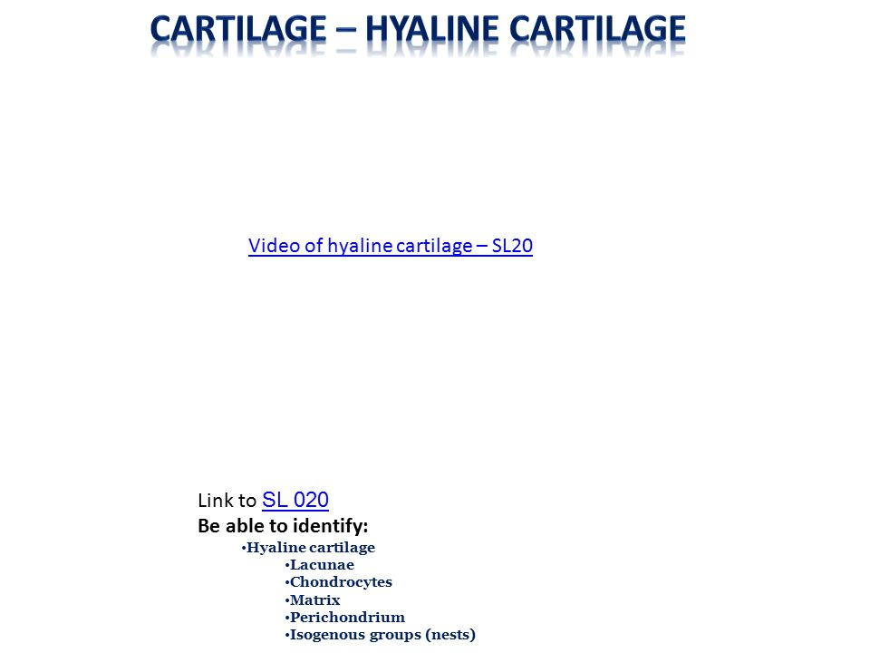 As one would expect, developing cartilage will have features similar to mature cartilage, such as cells within lacuna.