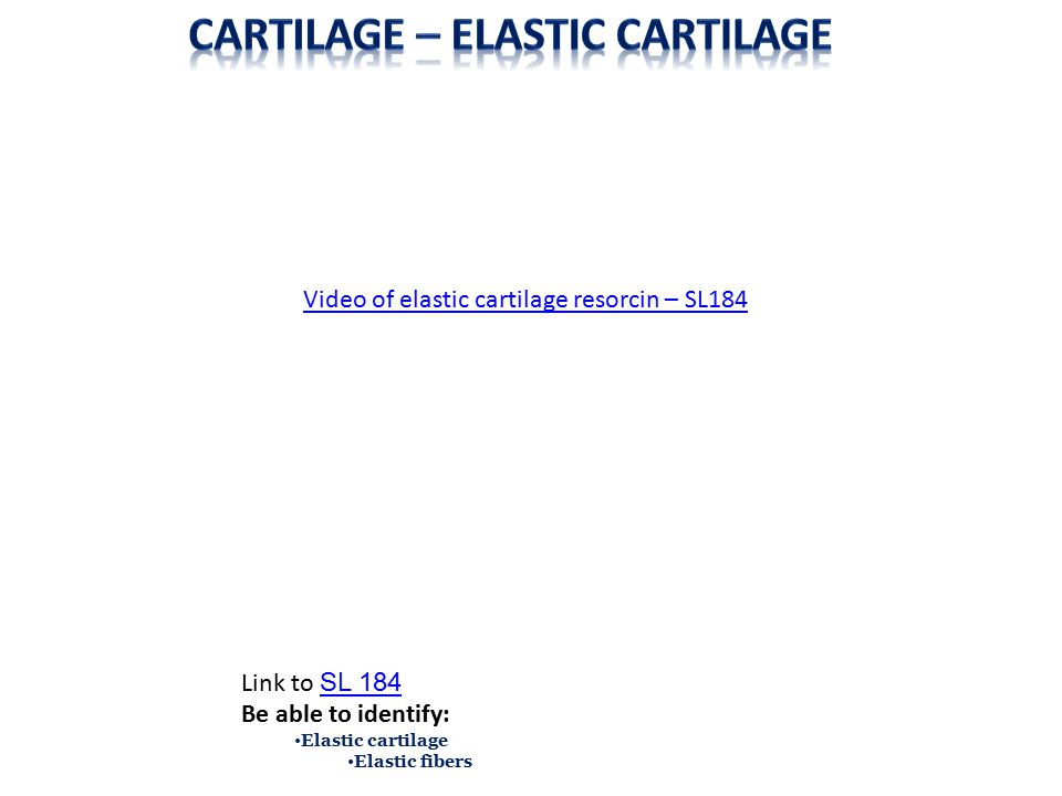 Fibrocartilage (fibrous cartilage) is essentially hyaline cartilage + type I collagen fibers added to the matrix.