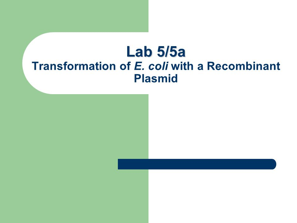 Lab 5/5a Lab 5/5a Transformation of E. coli with a Recombinant Plasmid Lab 2