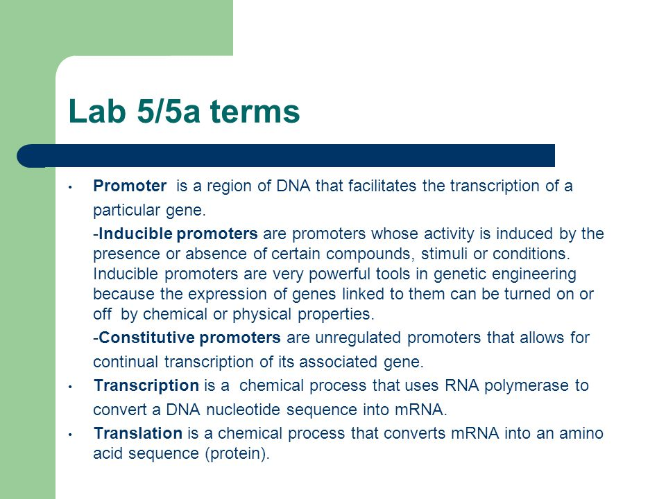 Lab 5/5a terms Promoter is a region of DNA that facilitates the transcription of a particular gene.