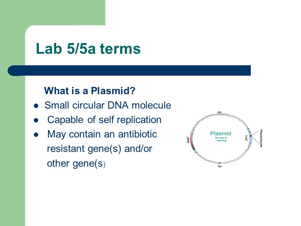 Lab 5/5a terms What is a Plasmid.
