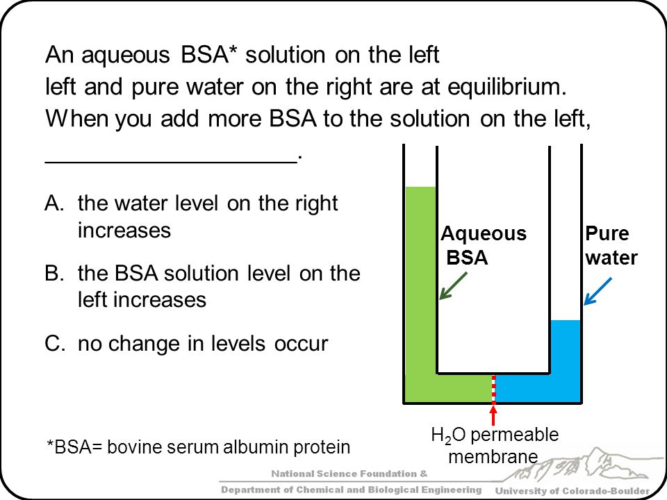 An aqueous BSA* solution on the left left and pure water on the right are at equilibrium. When you add more BSA to the solution on the left, _________