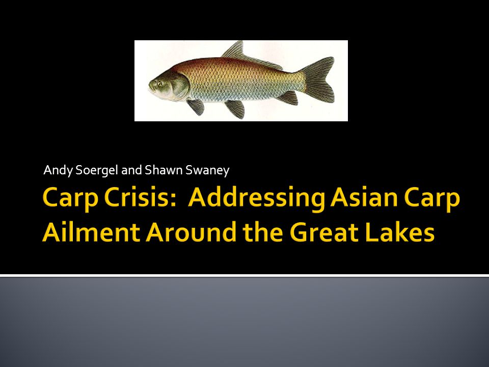  This is the most reliable way to completely avoid the carp from entering the Great Lakes  There would be relatively few environmental repercussions  The fish could be isolated and dealt with more effectively  Returns Great Lakes to original ecological integrity before the canal was built