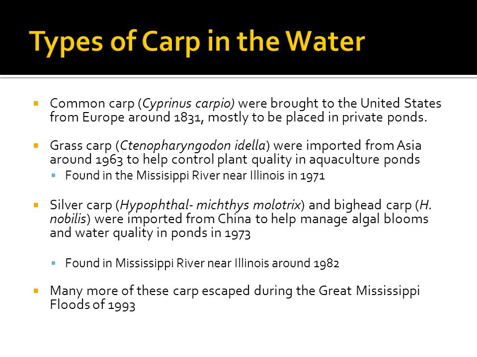  Common carp (Cyprinus carpio) were brought to the United States from Europe around 1831, mostly to be placed in private ponds.