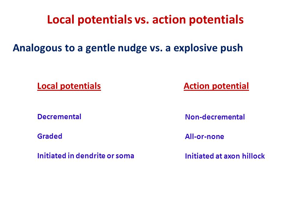 Local potentials vs.action potentials Analogous to a gentle nudge vs.