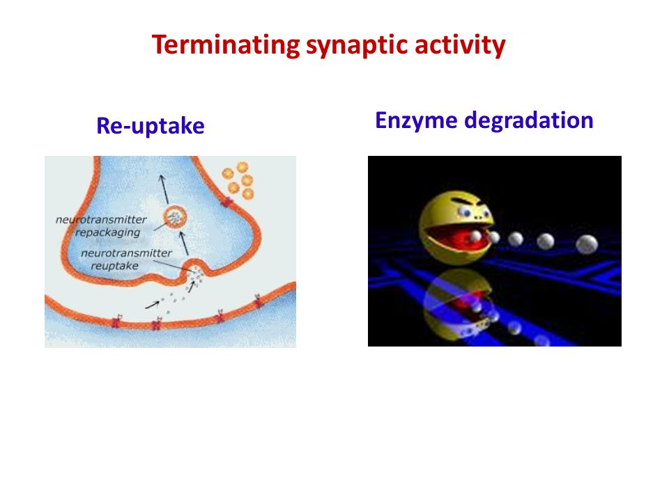 Terminating synaptic activity Re-uptake Enzyme degradation