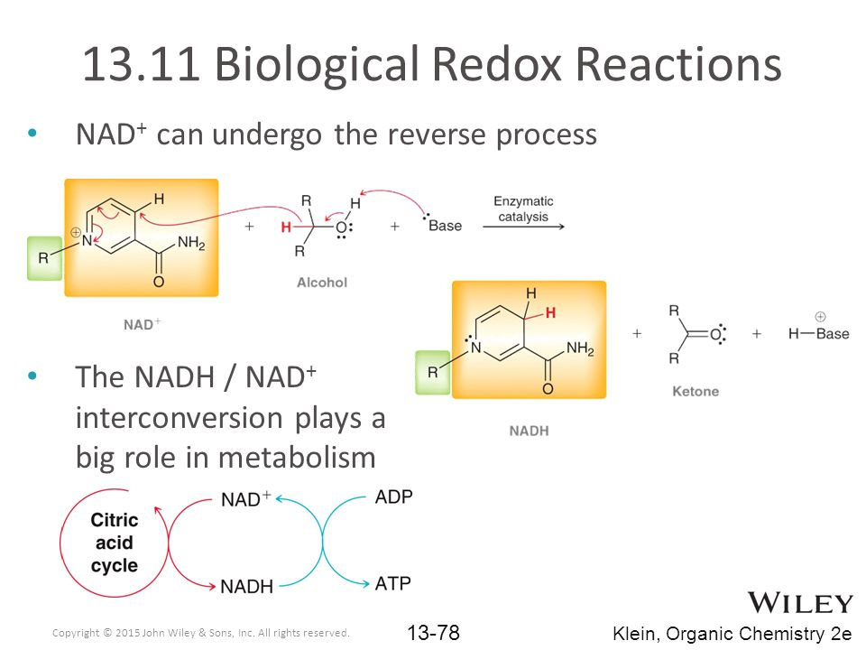 NAD + can undergo the reverse process The NADH / NAD + interconversion plays a big role in metabolism 13.11 Biological Redox Reactions Copyright © 2015 John Wiley & Sons, Inc.