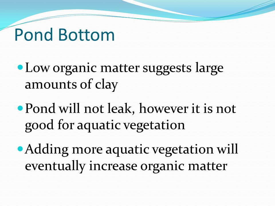 Pond Bottom Low organic matter suggests large amounts of clay Pond will not leak, however it is not good for aquatic vegetation Adding more aquatic vegetation will eventually increase organic matter