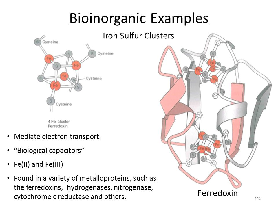 Bioinorganic Examples Iron Sulfur Clusters Mediate electron transport.